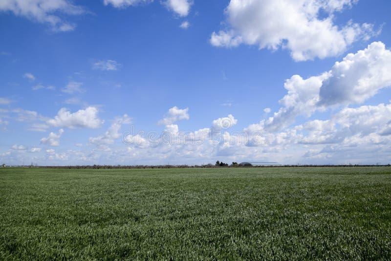 Grönt fält av ungt vete och himmel med moln I avståndet vara kan den sedda hangaren royaltyfria foton