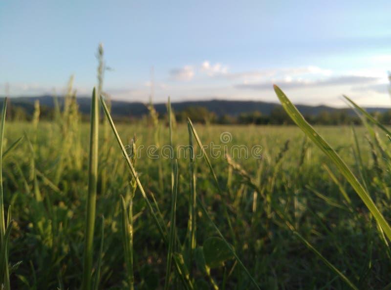 Grönt fält med berg i bakgrunden royaltyfri fotografi