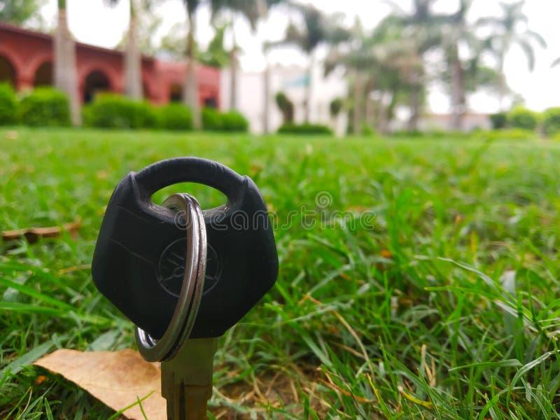 Grönt fält med härligt gräs royaltyfri foto