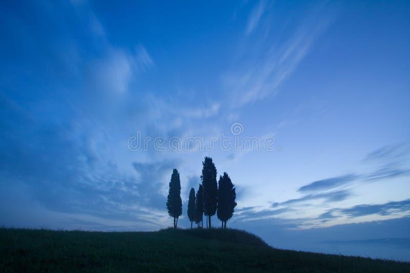 Grönt fält med mörkt - blå himmel med vita moln och träd, landskap från Tuscany, Italien Grön äng för sommar med cypressträd royaltyfri fotografi