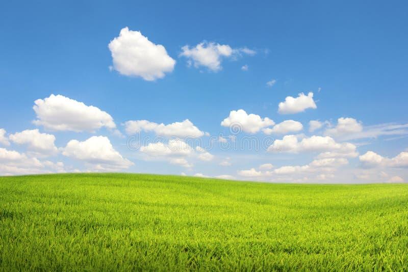 Grönt fält med molnet för blå himmel royaltyfria bilder