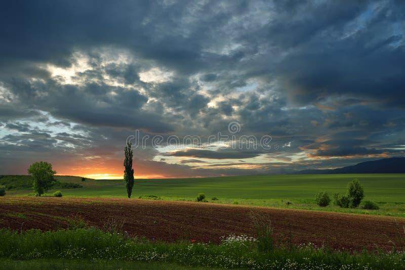 Grönt fält med träd och blommor på bakgrunden av solnedgången arkivbild