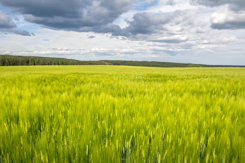 Grönt fält och prydlig skog på horisont arkivbilder