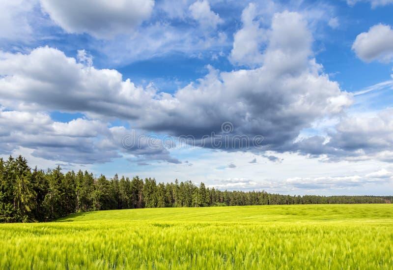 Grönt fält och skog under härlig blå himmel med moln arkivfoto