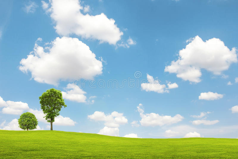 Grönt fält och träd med blå himmel arkivbilder