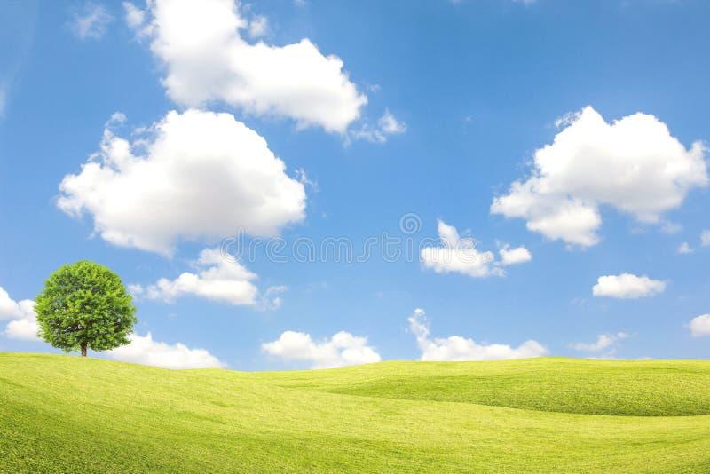 Grönt fält och träd med blå himmel och moln royaltyfri foto