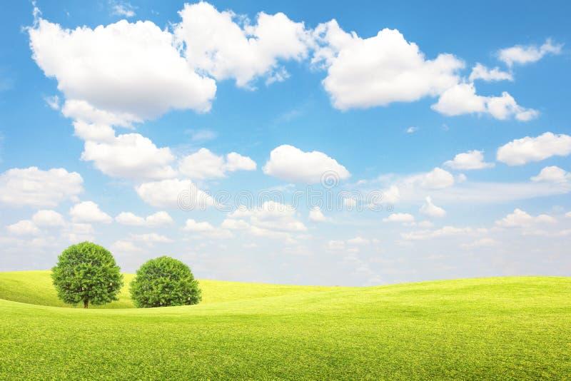 Grönt fält och träd med blå himmel och moln royaltyfria bilder