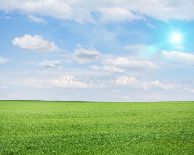 Grönt fält på en solig sommardag royaltyfri fotografi