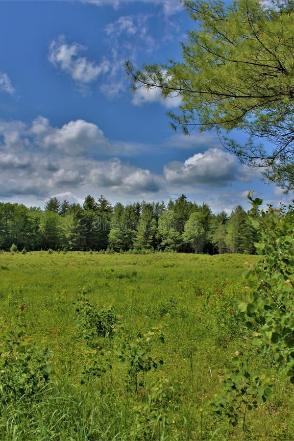 Grönt fält som lokaliseras i Childwold, New York, Förenta staterna royaltyfria bilder