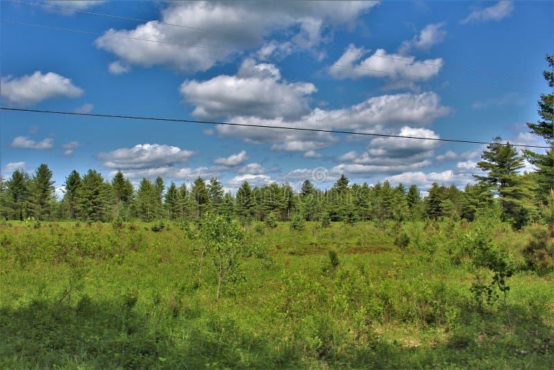 Grönt fält som lokaliseras i Childwold, New York, Förenta staterna royaltyfria foton
