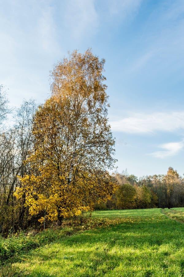 Grönt fält, träd med gul orange lövverk, höstlandskap royaltyfri foto