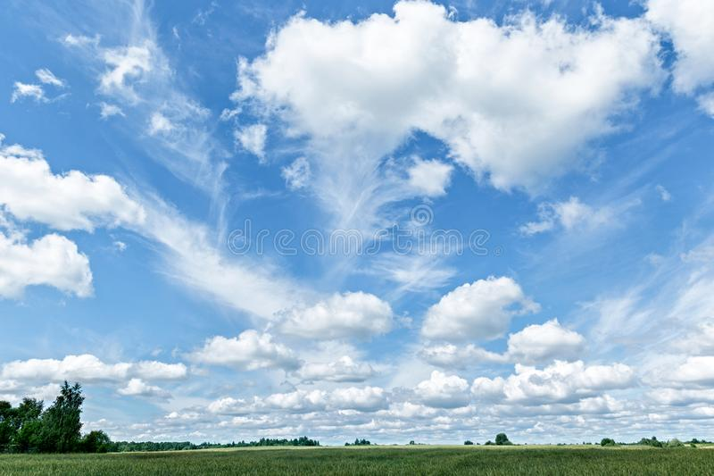 Grönt fält, träd och blå himmel med vita moln royaltyfria foton