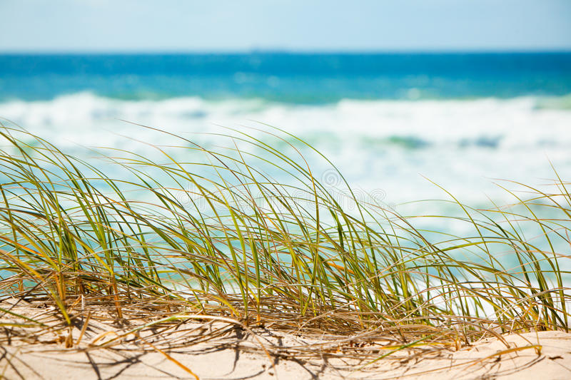 grönt förbise för stranddyngräs som är sandigt royaltyfri bild
