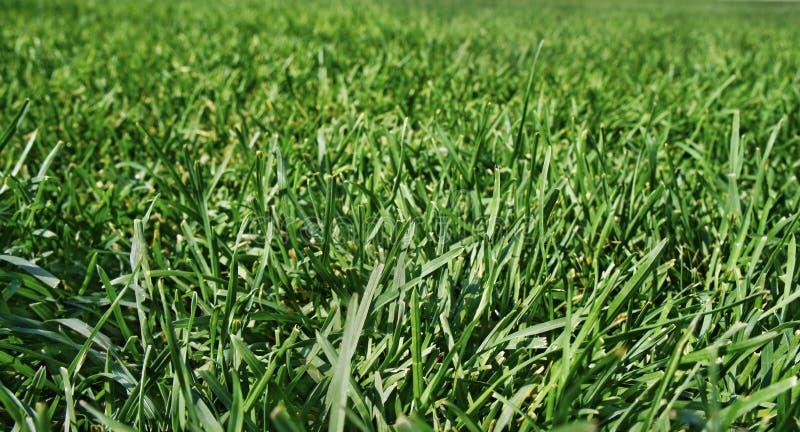 Grönt frodigt gräs på ett rymligt fält arkivfoton
