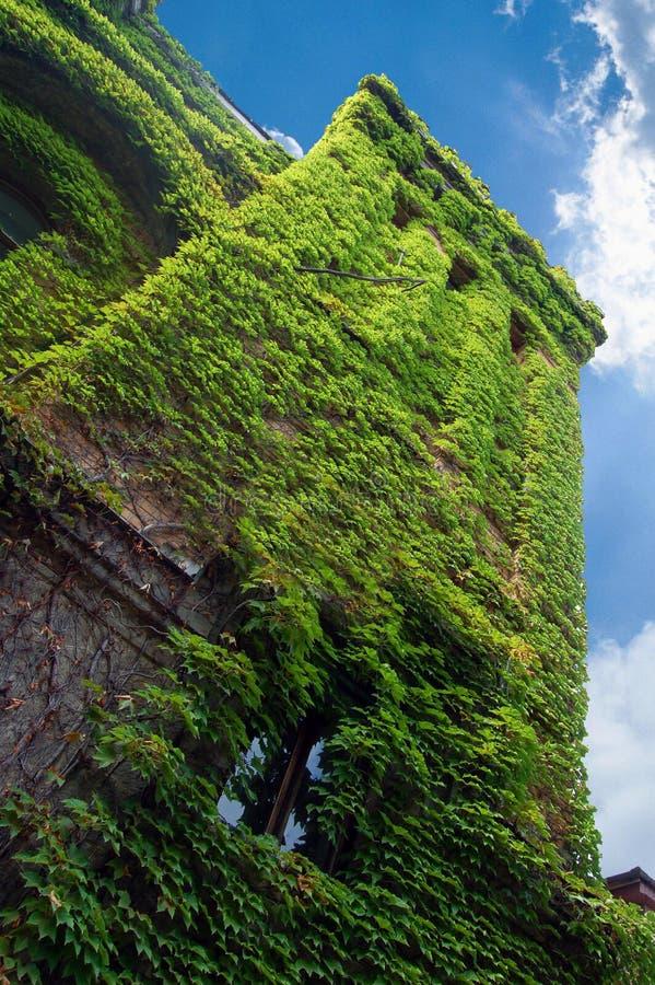 grönt gammalt torn för slott royaltyfria foton