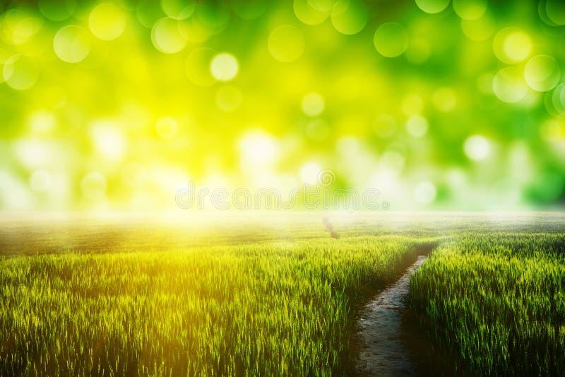 Grönt gräs arkivfoton