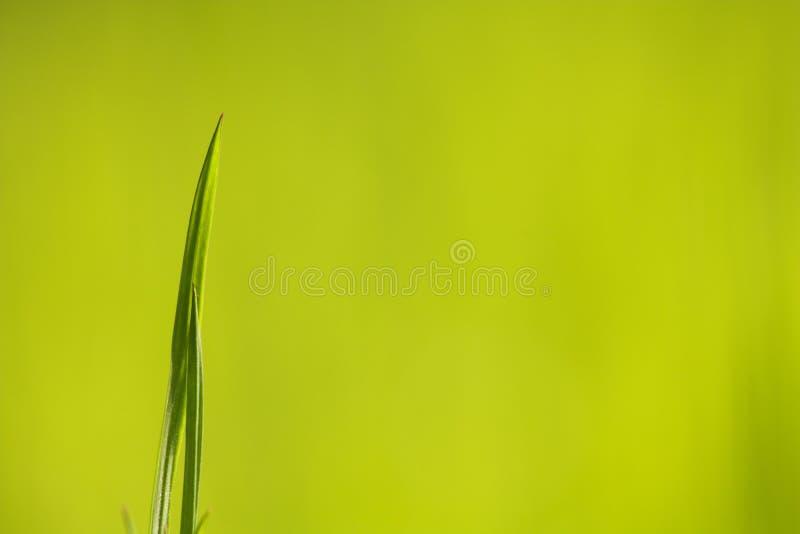 Grönt gräs royaltyfria bilder