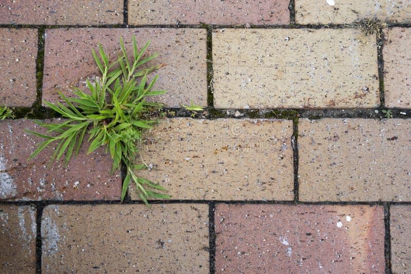 grönt gräs 1 arkivfoton