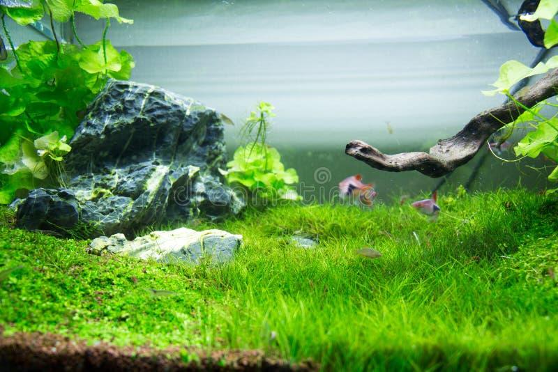 Grönt gräs för akvarium royaltyfri bild