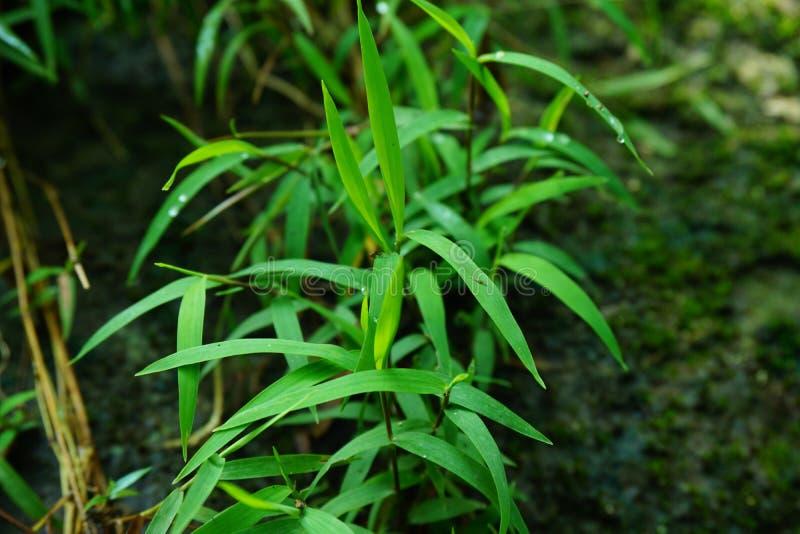 Grönt gräs för naturfress royaltyfria bilder