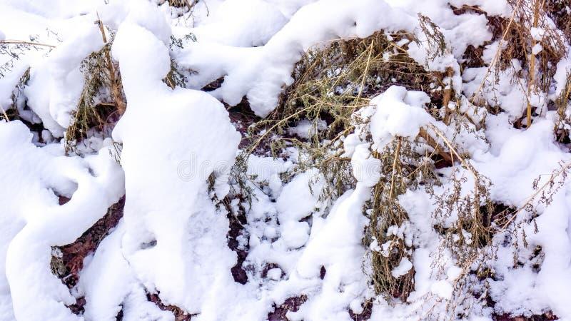 Grönt gräs för sista höst under första klara vita snömatta royaltyfri bild