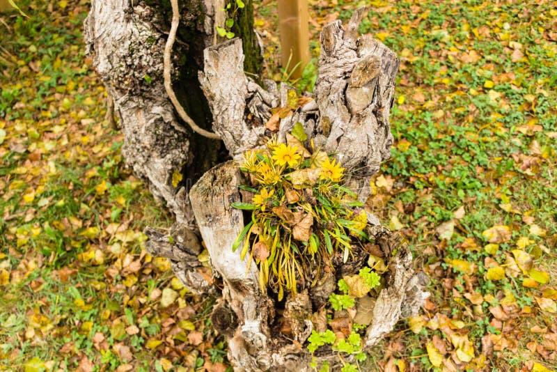 Grönt gräs, gulingblommor och bruntsidor royaltyfri bild