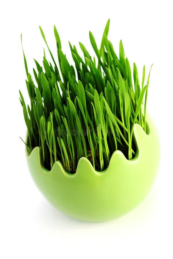 Grönt gräs i ägg arkivbilder