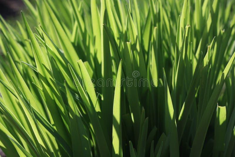 Grönt gräs i det ljusa ljuset av solen arkivbild
