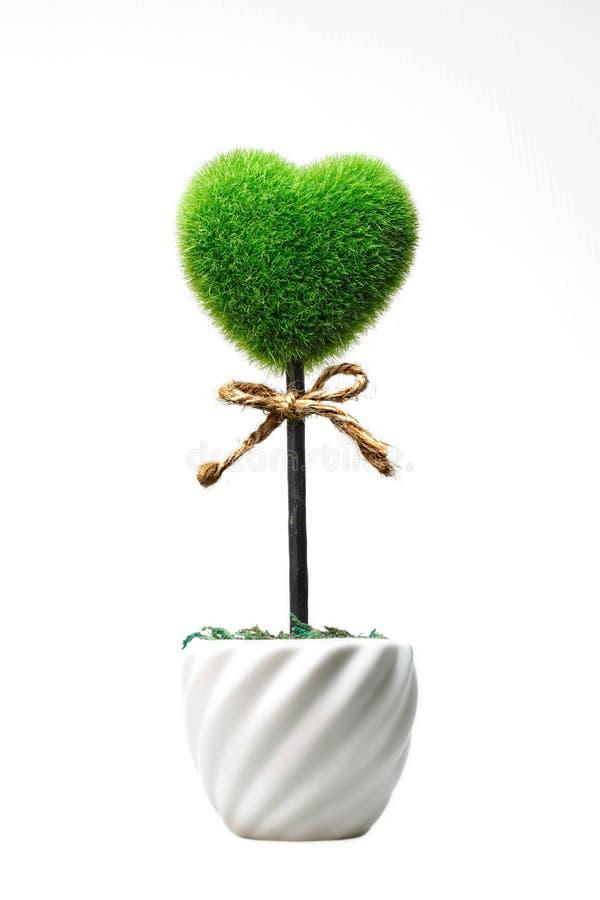 Grönt gräs i hjärtaform i den vita keramiska krukan arkivbild