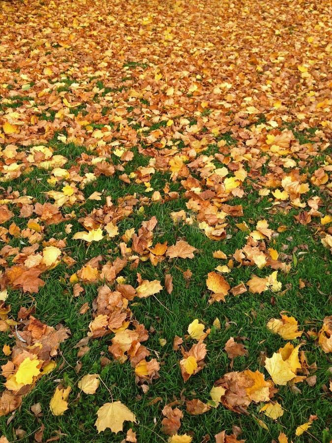Grönt gräs i parkera mycket av den fallande gula orange höstdrien royaltyfri bild