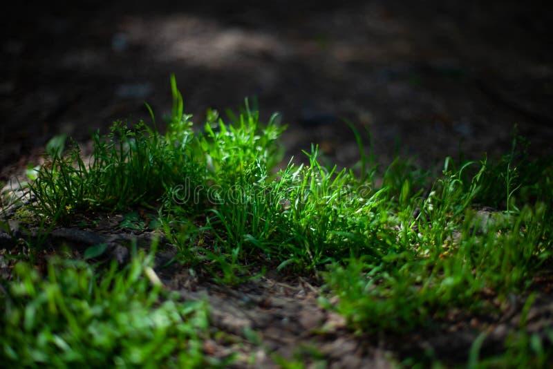 Grönt gräs i solljus i skog arkivfoton