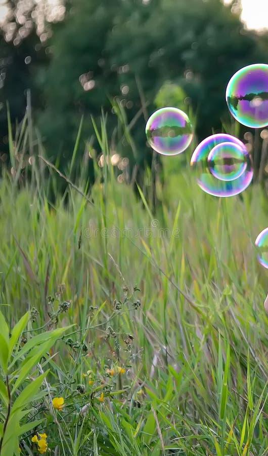 Grönt gräs med den färgrika bubblan på skoggläntan royaltyfri bild