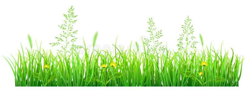 Grönt gräs med maskrosor vektor illustrationer