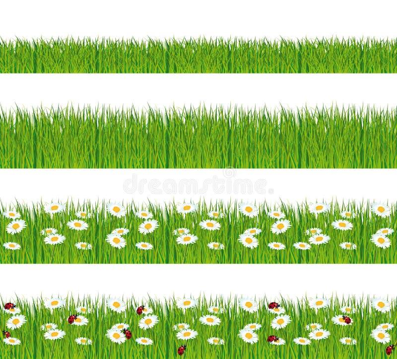 Grönt gräs med tusenskönor och nyckelpigor. royaltyfri illustrationer