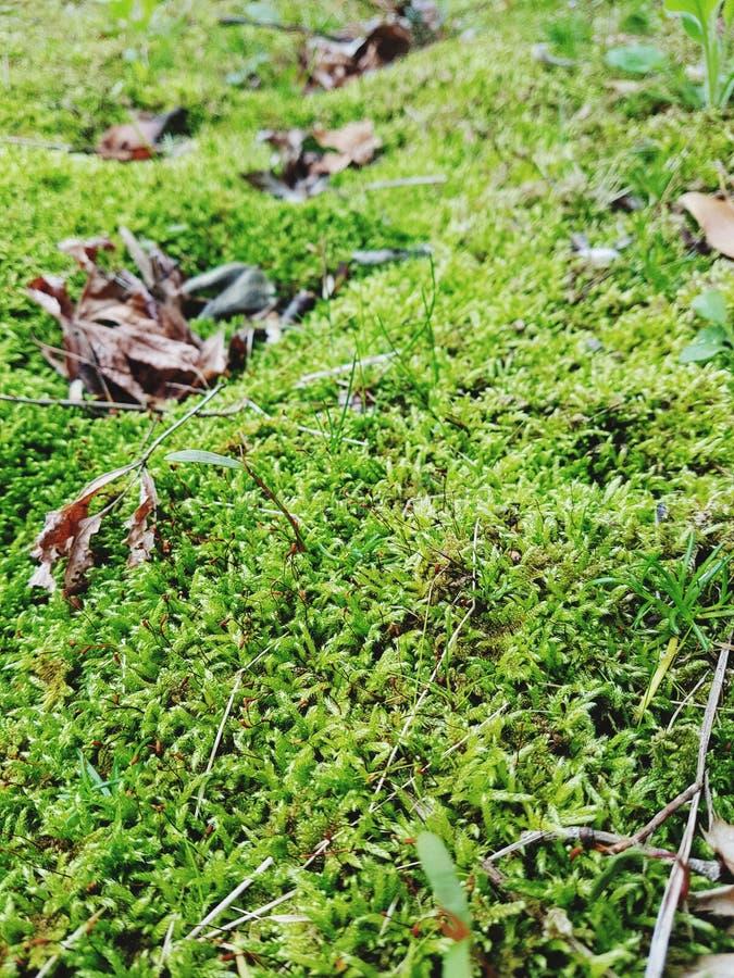 Grönt gräs och blad fotografering för bildbyråer