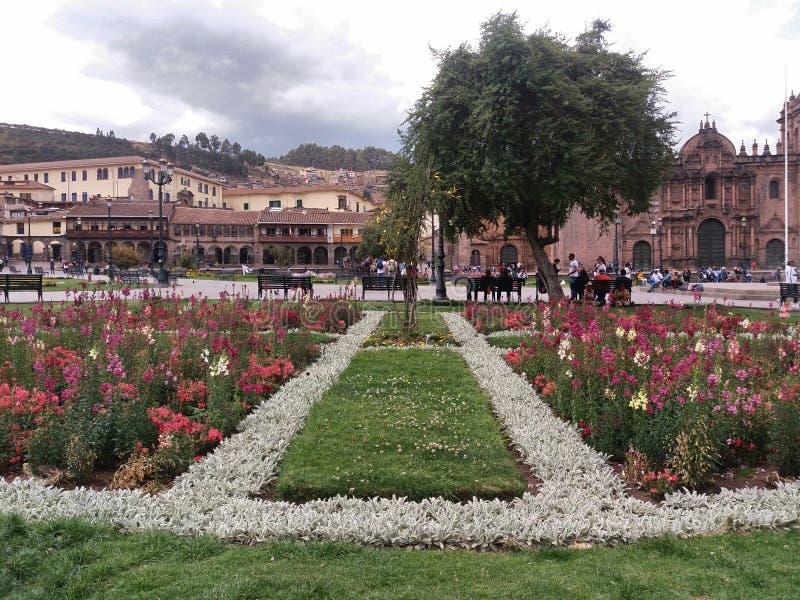 Grönt gräs och blommor royaltyfri bild