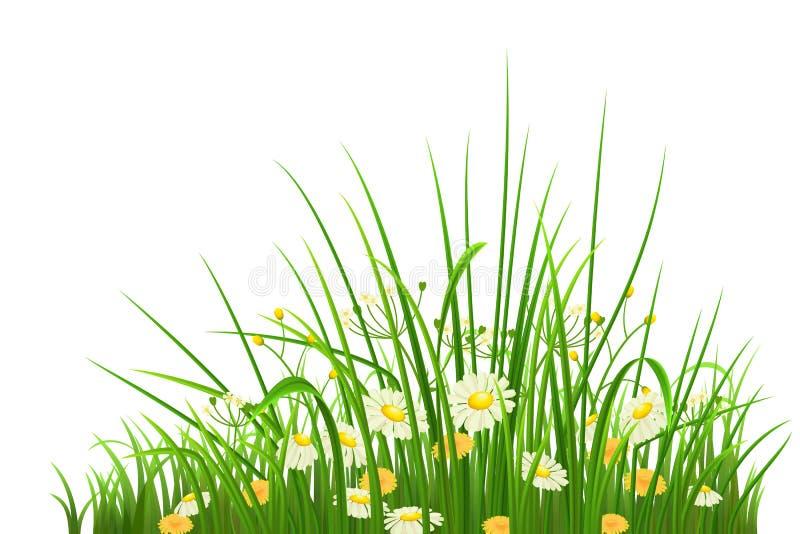 Grönt gräs och blommor stock illustrationer