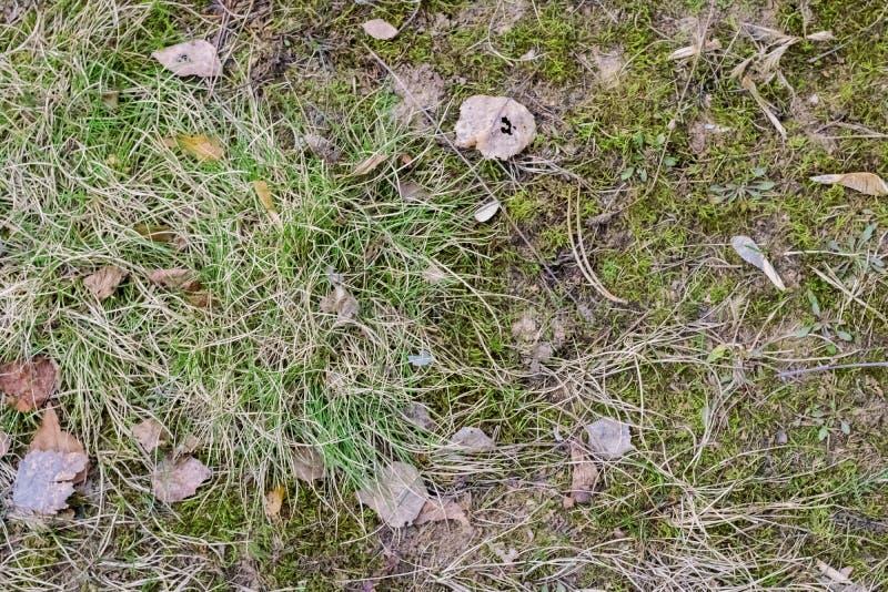Grönt gräs och gula sidor bakgrund eller textur fotografering för bildbyråer