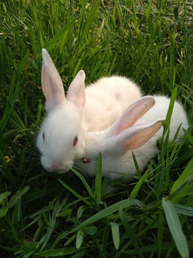 Grönt gräs och kanin royaltyfri fotografi