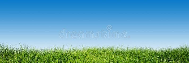 Grönt gräs på blått gör klar himmel, vårnaturpanorama arkivfoto
