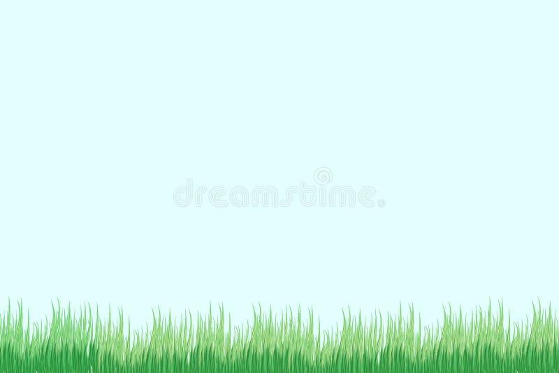 Grönt gräs på en genomskinlig bakgrund glänta i skoggräset Kamomillar på gläntan vektor illustrationer