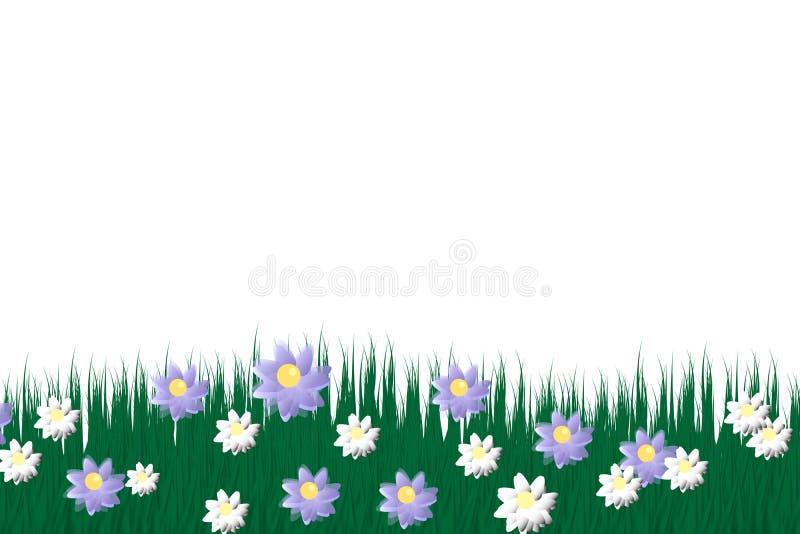 Grönt gräs på en genomskinlig bakgrund glänta i skoggräset Kamomillar på gläntan royaltyfri illustrationer