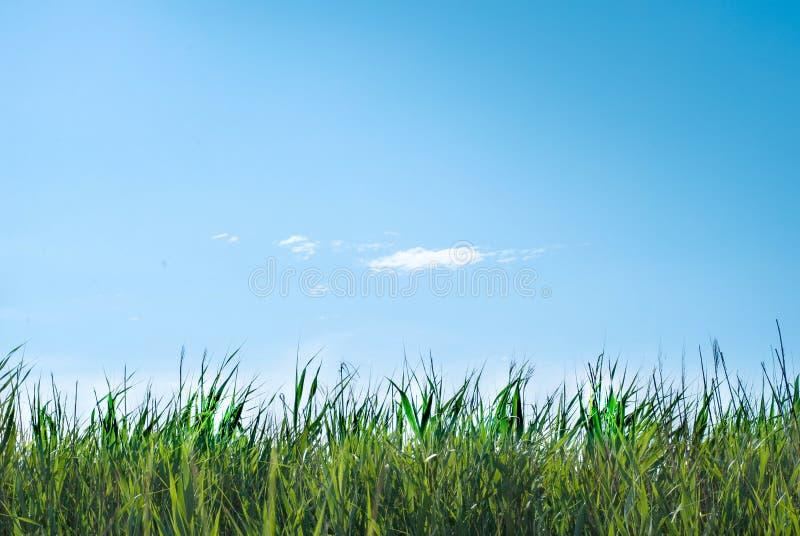 Grönt gräs på en solnedgångbakgrund Bakgrund royaltyfria foton