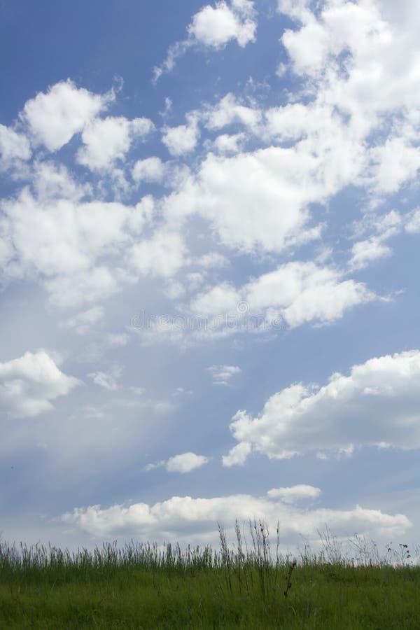 Grönt gräs på en sommaräng blå sky royaltyfria bilder