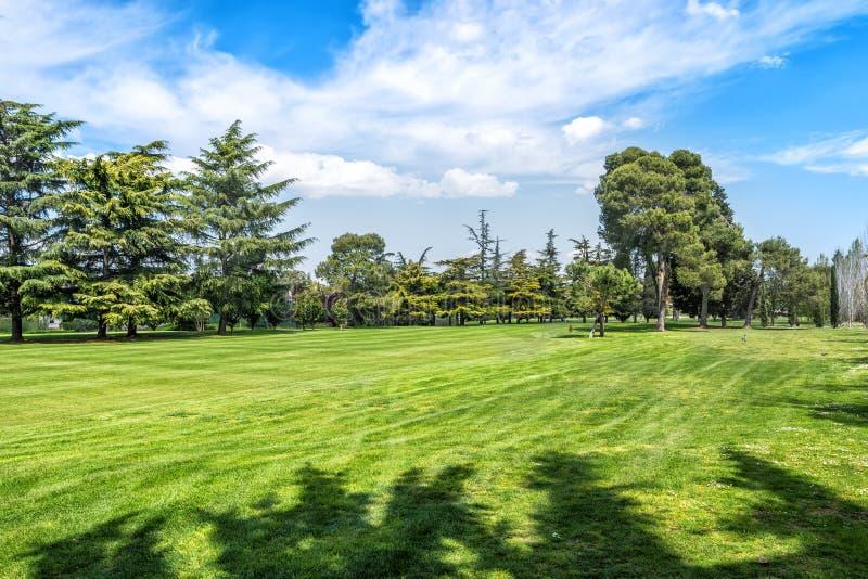 Grönt gräs på ett golffält på solig dag royaltyfri fotografi
