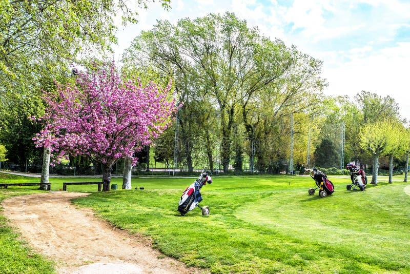 Grönt gräs på ett golffält på solig dag royaltyfri bild