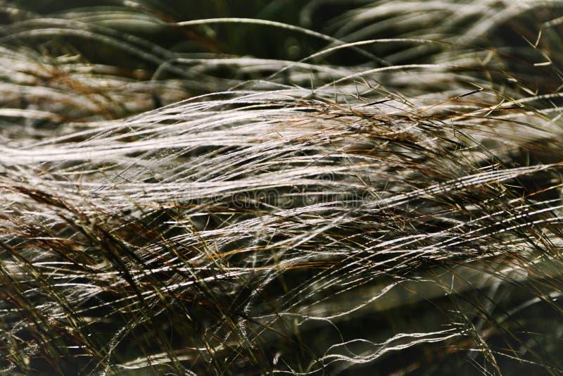Grönt gräs på sommarbakgrund eller textur arkivfoto