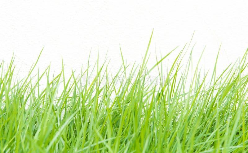Grönt gräs på väggbakgrund royaltyfri foto