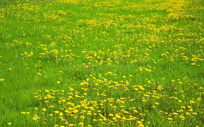 Grönt gräs sätter in royaltyfri bild