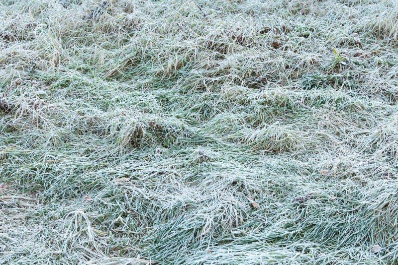 Grönt gräs som täckas med frost fotografering för bildbyråer